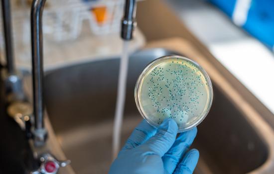 CARO Bacteria Water